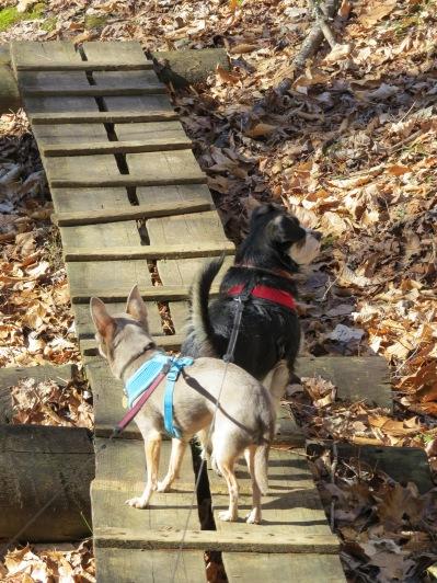 Bella and Leo at Big South Fork