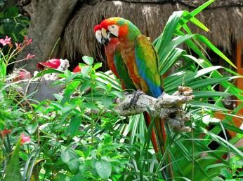 Xel-Ha Parrots 2
