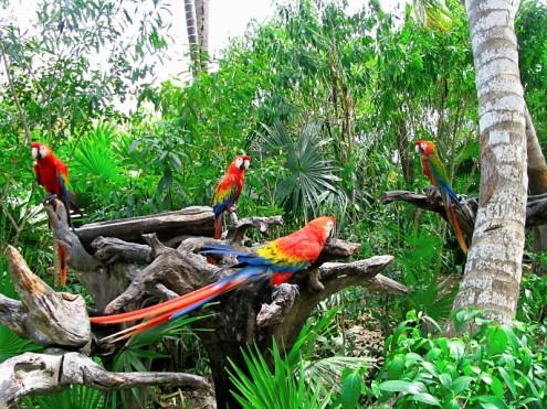 Xel-Ha Parrots